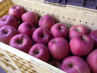 おびなたシードルのリンゴ農園