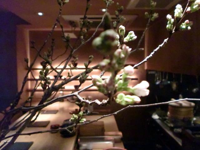 池尻おわんのブログ-ソメイヨシノ2
