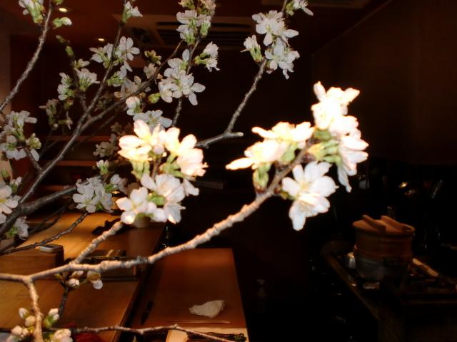 池尻おわんのブログ-ソメイヨシノ5