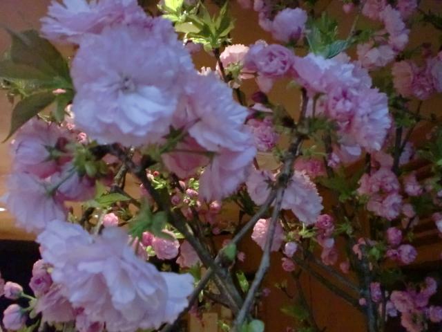 池尻おわんのブログ-八重桜1