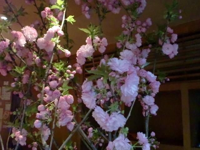 池尻おわんのブログ-八重桜3